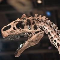 ¿Cómo se determina la edad de los fósiles? Carbono 14