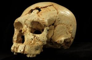 Fósil Humano