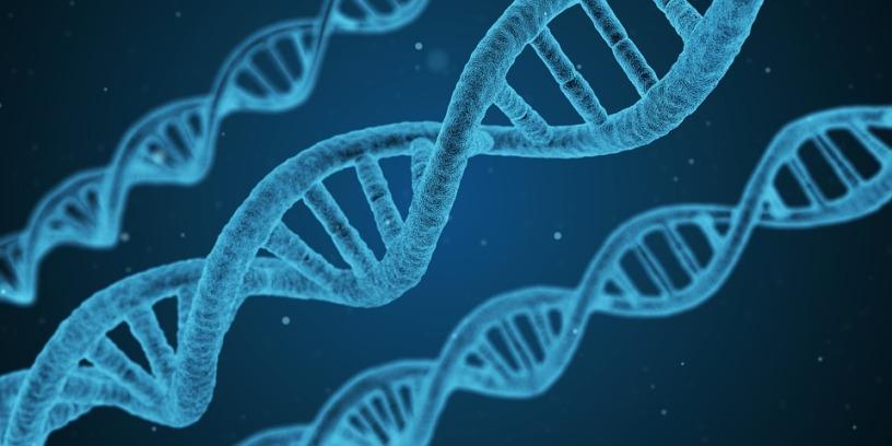 ADN Genética